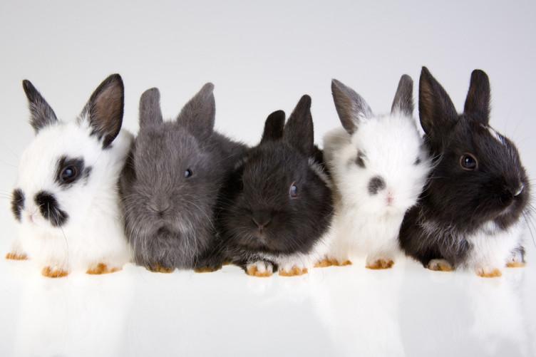 пять кроликов картинка новые лоты