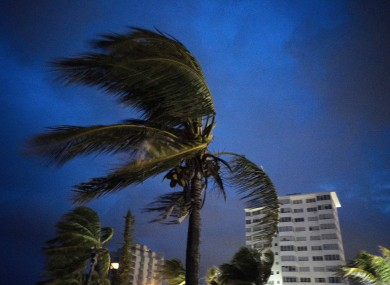 Strong winds move the palms of the palm trees at the first moment of the arrival of Hurricane Dorian in Freeport, Grand Bahama.