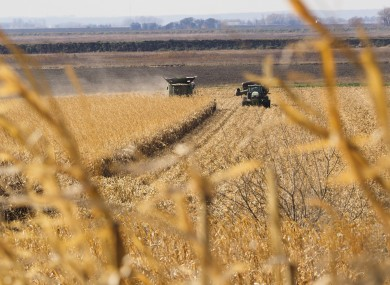 A combine harvests a cornfield while a wagon waits nearby to unload it in the Loess Hills of northwest Iowa