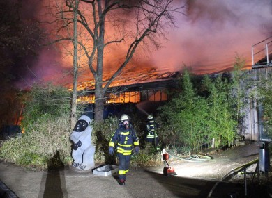 Firefighters in front of the burning monkey house at Krefeld Zoo in Germany today.