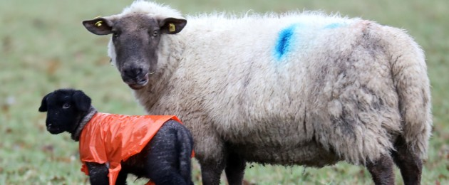 Farmers in the midlands have raised concerns for their animals in the wake of flooding in recent days.