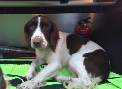 A stolen dog recovered by gardaí last week.