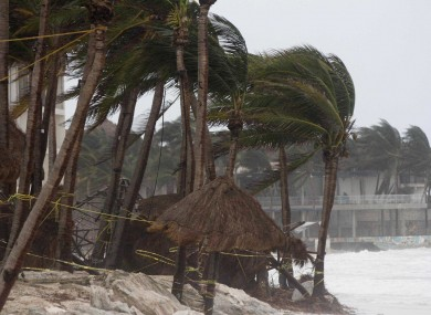 Palm trees are buffeted by the wind of Hurricane Zeta in Playa del Carmen, Mexico
