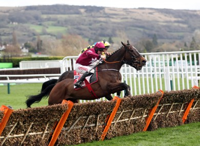 Could Abacadabras, near side, be a value bet for the Champion Hurdle?