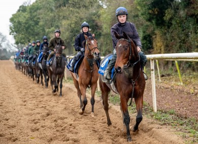 A morning exercise at the Cullentra yard in Meath (file photo)